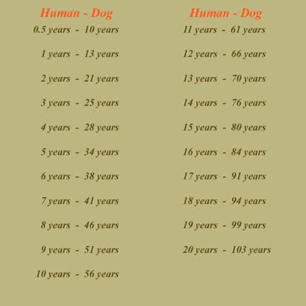 Below is the comparison age chart ( estimated ) between Human and Dog