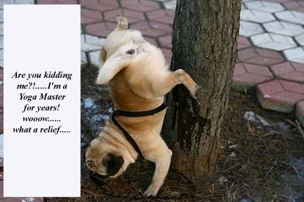 dog-pee-on-tree