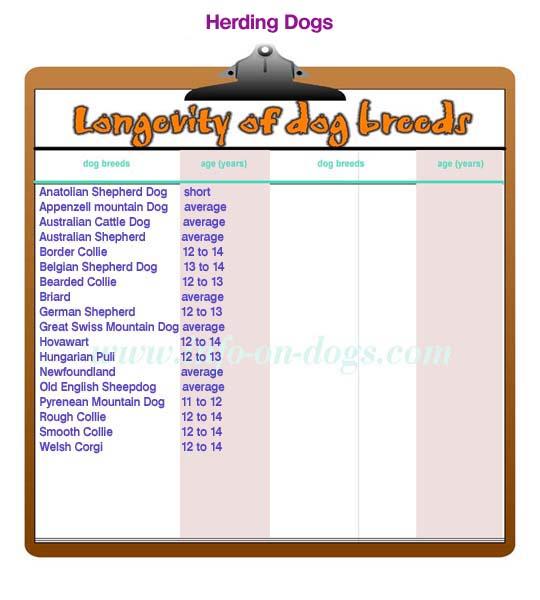 longevity of herding dogs