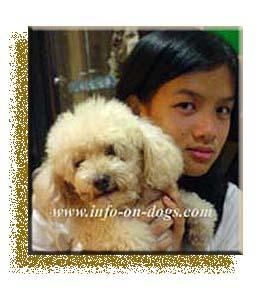 Agnes-poodle