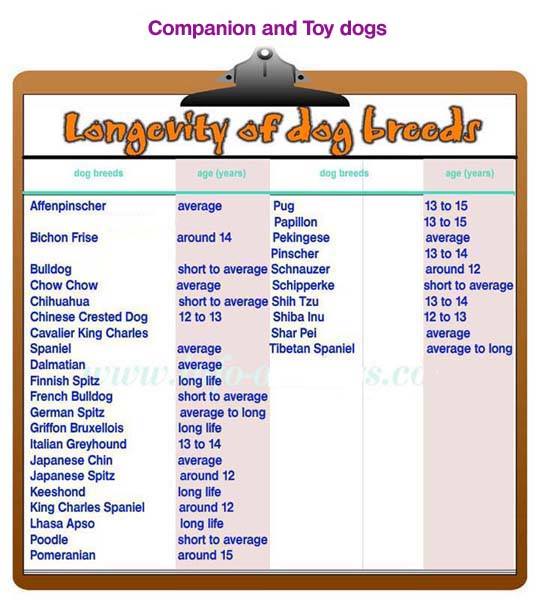 longevity of companion and toy dogs