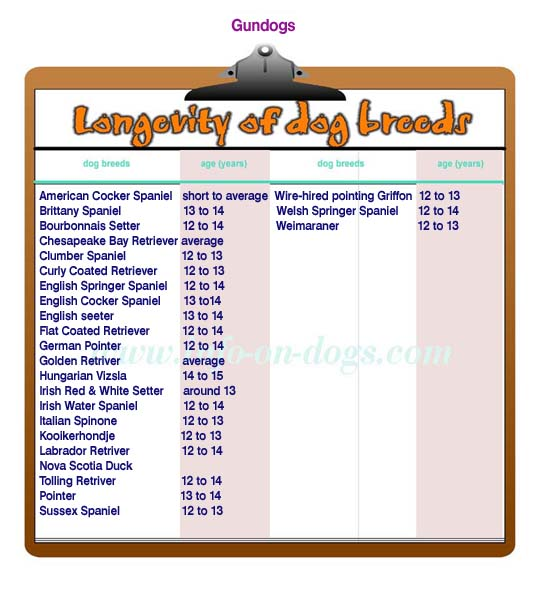 longevity of gundogs