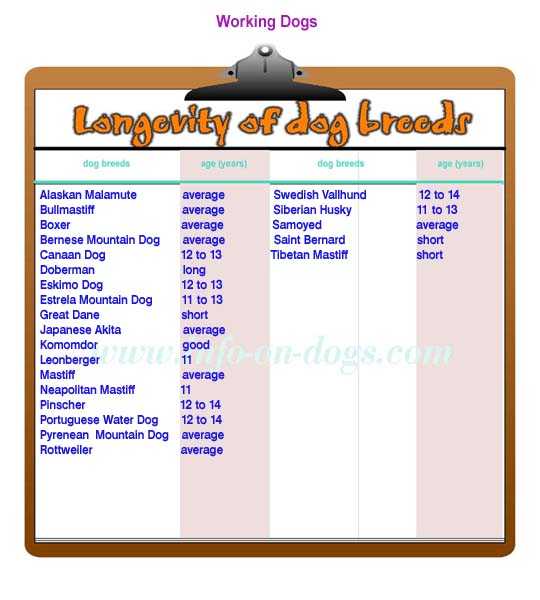 longevity of working dogs